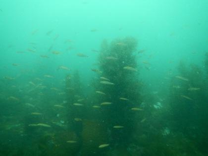 魚の群れ、見えにくい