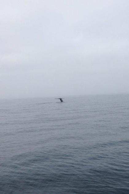 鯨の尻尾見えるかな?