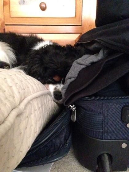 旅行鞄に寄り添って