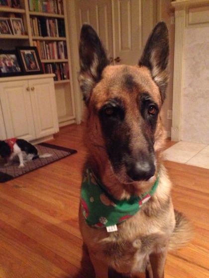 オイラは立派な犬でござる