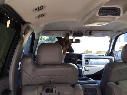 運転免許はお持ち?