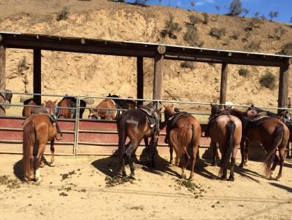 サンセット牧場の馬達