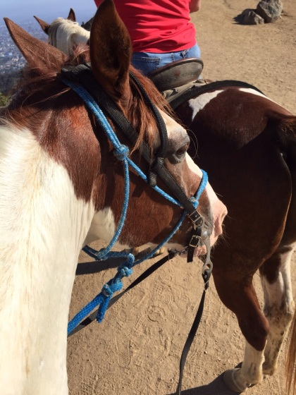私の馬の名前はアパッチ